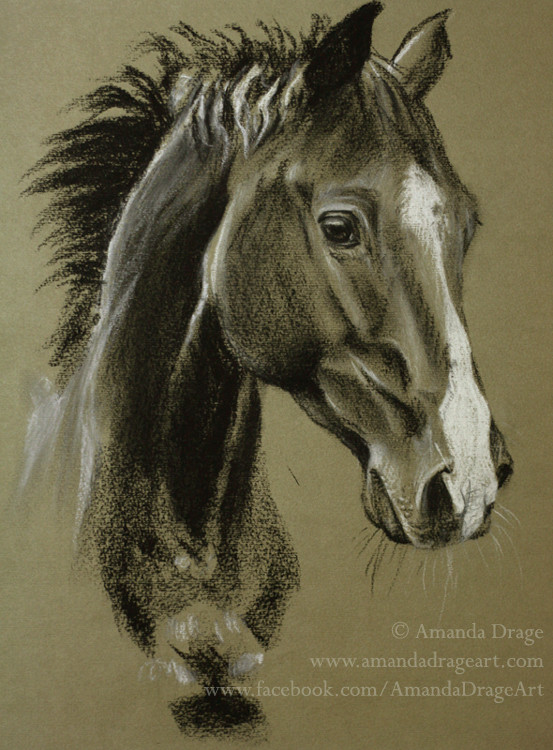 Horse Tonal Sketch
