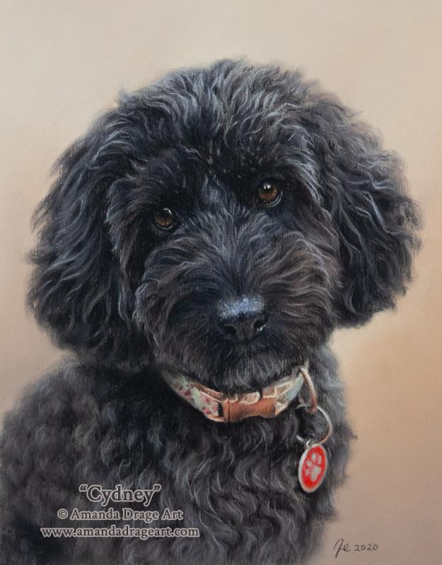 Cockapoo Pastel Portrait on Sanded Paper