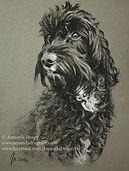 Cockapoo charcoal portrait by Amanda Drage Art
