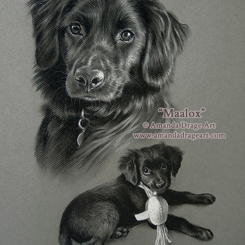 Black Dog and Puppy Pencil Portrait