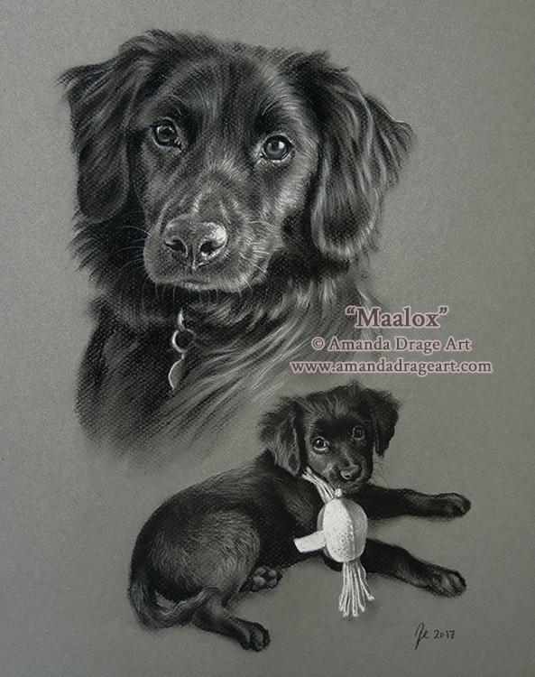 Dog and Pup Tonal Sketch