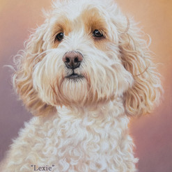 Cream Cockapoo Pastel Portrait