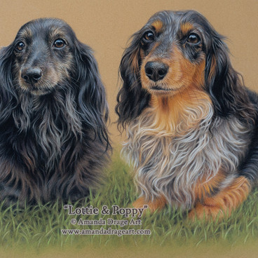 05-Longhaired-Dachshunds-Pastel-Portrait