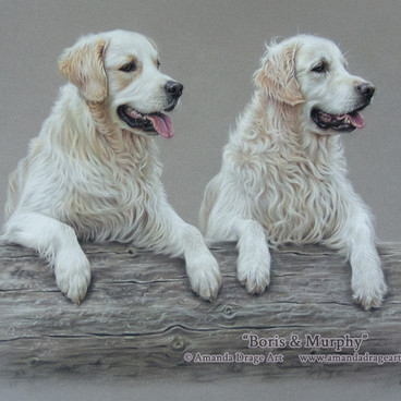 Golden Retrievers Pastel Portrait