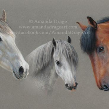 Horses and Welsh Pony Pastel Portrait