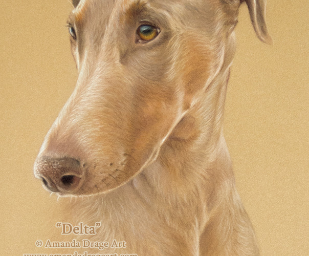 Dobermann Pastel Portrait on Tan Velour Paper