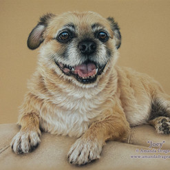 Mixed Breed Dog Pastel Portrait