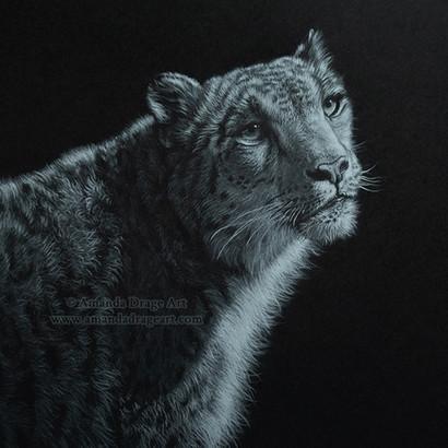 Snow Leopard Pencil Drawing