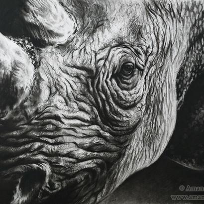 Black Rhinoceros Charcoal Drawing