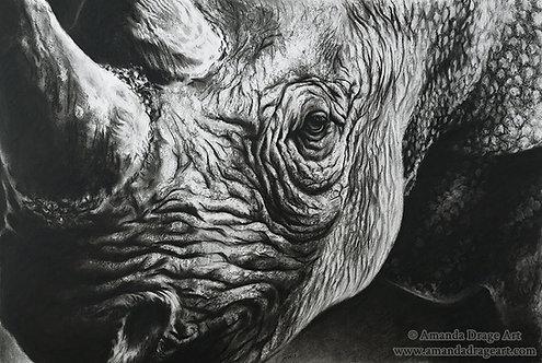 """""""Fragility - Black Rhino"""" Limited Edition Print"""