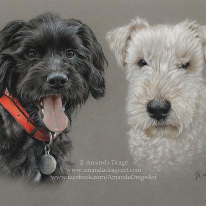 Cockapoo and Lakeland Terrier Pastel Portrait