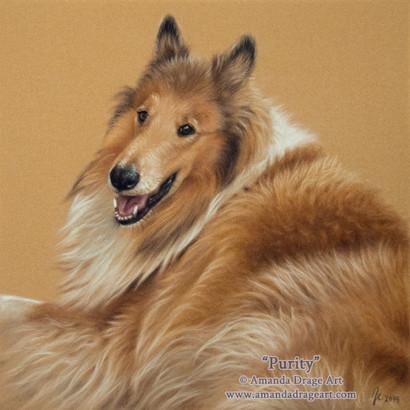 Rough Collie Pastel Portrait