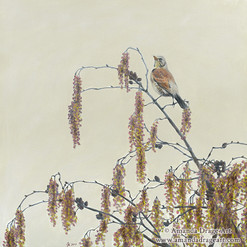 Fieldfare Oil Painting