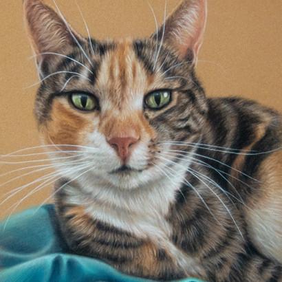 Calico Cat Pastel Portrait