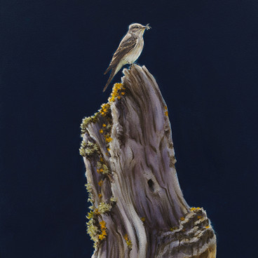 Spotted Flycatcher Oil Painting