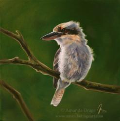Kookaburra Oil Painting
