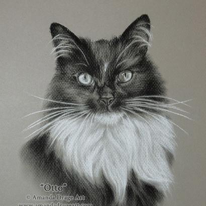 Black and White Cat Pencil Portrait