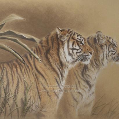Bengal Tigers Pastel Drawing