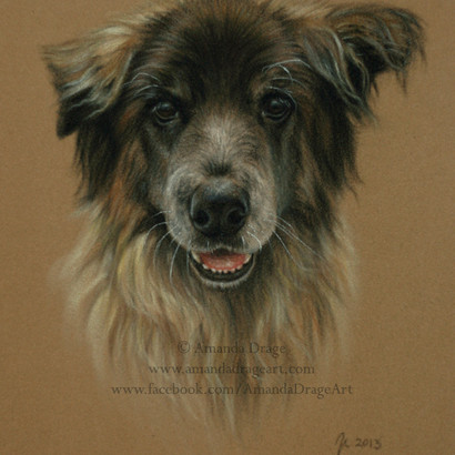 Mixed Breed Dogs Pastel Portrait