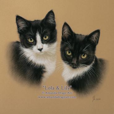 Black and White Kittens Pastel Portrait