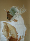 Drawing of a horse in pastel by Amanda Drage Art