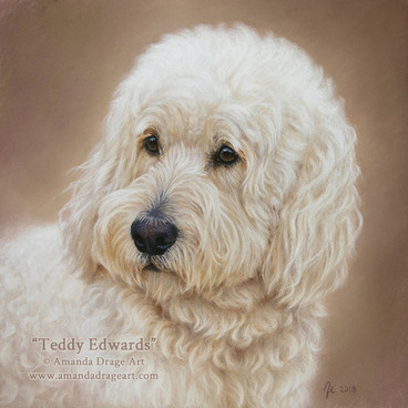 Cream Labradoodle Pastel Portrait