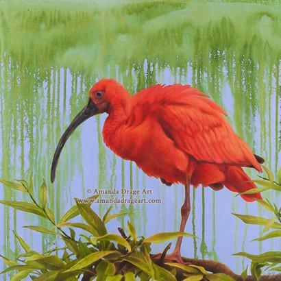 Scarlet Ibis Painting