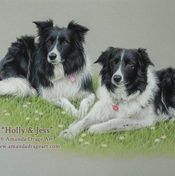 Border Collies Pastel Portrait