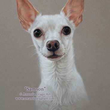 Chihuahua Pastel Portrait