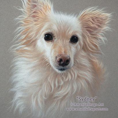 Chihuahua x Pomeranian Pastel Portrait