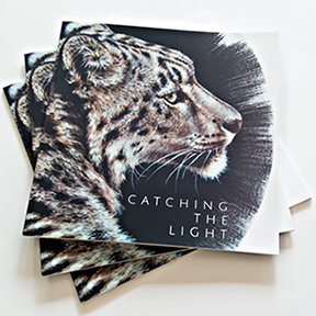 Catching The Light Catalogue