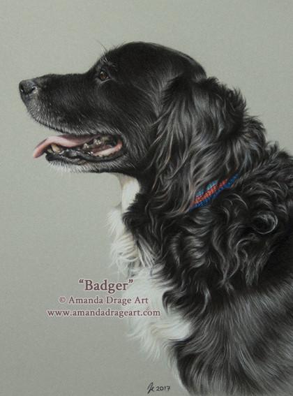 Black and White Dog Pastel Portrait
