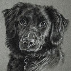 Charcoal portrait of a black dog by Amanda Drage Art