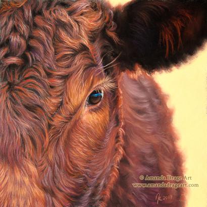 Red Devon Cow Pastel Portrait