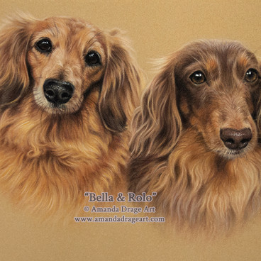 Long-haired Dachshunds Pastel Portrait