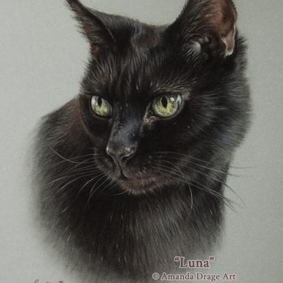 Black Cat Pastel Portrait
