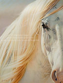 Horse pastel drawing Serenity by Amanda Drage Art