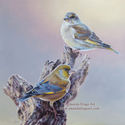 Greenfinch Pair Oil Painting