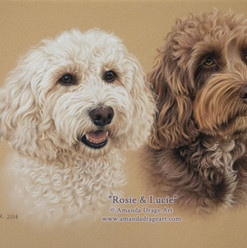 Cream and Chocolate Cockapoos Pastel Portrait