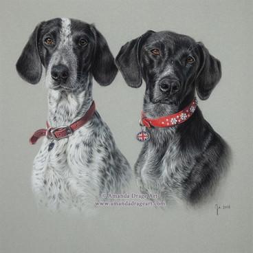 Pointer Dogs Pastel Portrait