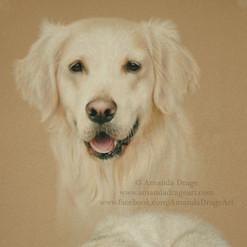 Golden Retriever Adult and PupPastel Portrait