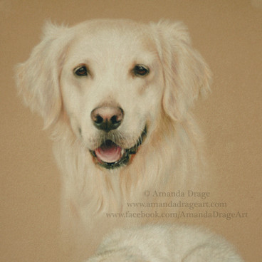 Golden Retriever Adult and PupPastel Portrait