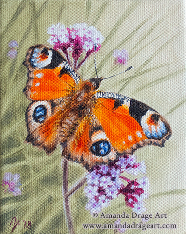 Peacock Butterfly on Verbena