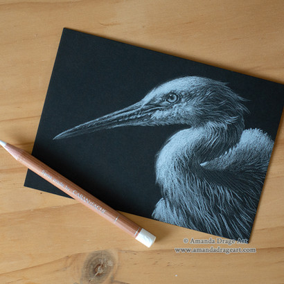 Little Egret Mini Pencil Drawing