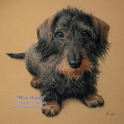 Wire-haired Dachshund Pastel Portrait