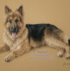 German Shepherd Pastel Portrait