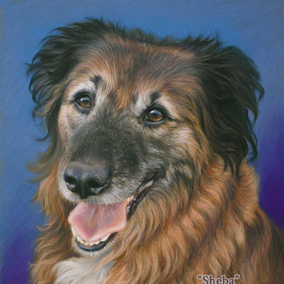 Mixed Breed Shepherd Dog Pastel Portrait