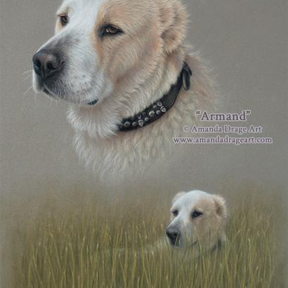 Central Asian Shepherd Dog Pastel Portrait