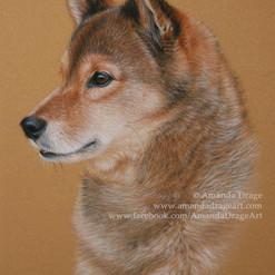 Sesame Japanese Shiba Inu Pastel Portrait