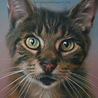 Portrait of a Tabby cat by Amanda Drage Art